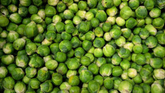 a lot of Brussels sprouts and nothing else
